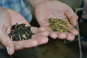 Arrowhead Wild Rice