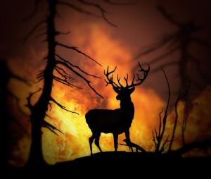 9732380 - large elk escaping a wild land fire, 3d model , 300 d.p.i